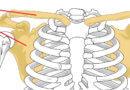 Training gegen Schulterprobleme